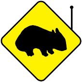 wombatdiretta